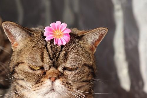 花を頭に乗せられた猫