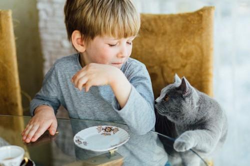 猫が子供の匂いを嗅ぐ