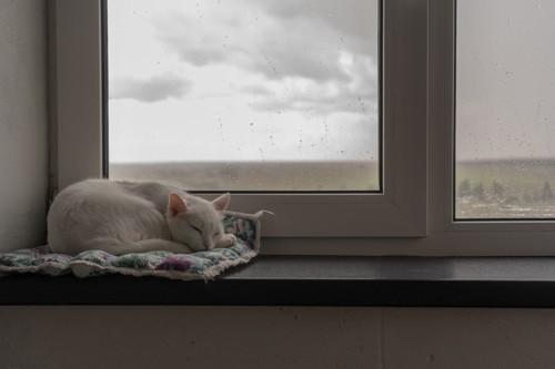 隅っこで寝る猫
