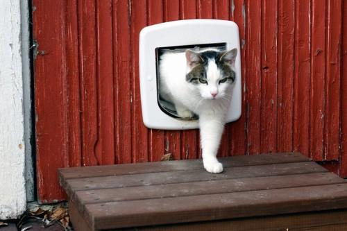 猫扉から出る猫