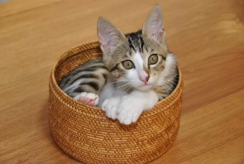 小さなバスケットに入った子猫
