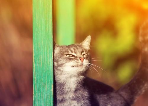 アピールすりすりする猫