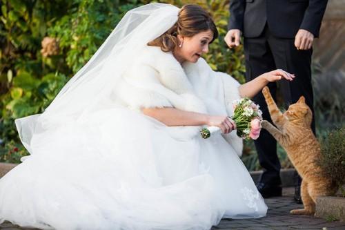 花嫁とハイタッチする猫