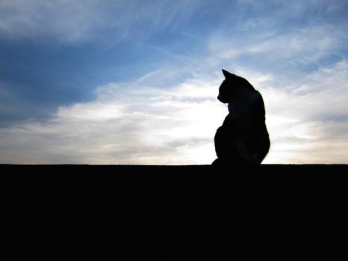 薄暗い空と猫のシルエット