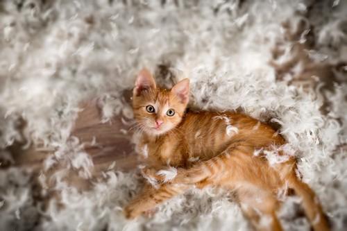 羽毛に埋もれて高ぶっている猫