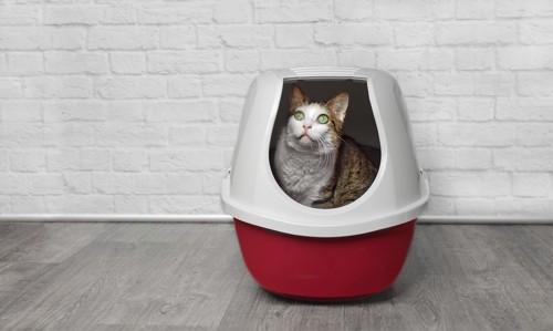 猫用トイレの中で座る猫