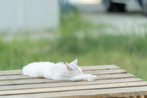 ベンチに突っ伏して眠る猫