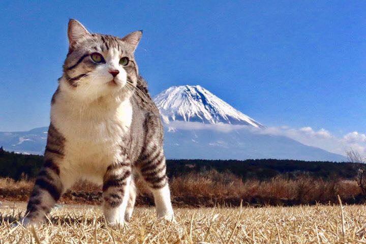 富士山前のニャン吉