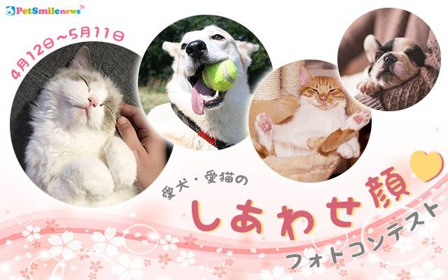 愛猫のしあわせ顔フォトコンテスト