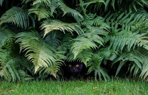 藪に隠れる猫