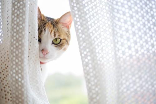 家政婦は見た、状態の猫