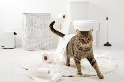 トイレットペーパーを散らかして遊ぶ猫