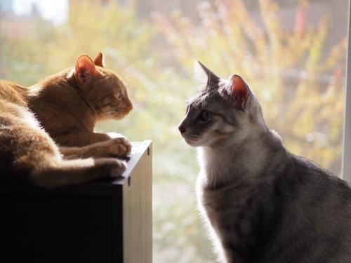 日向ぼっこをする猫たち