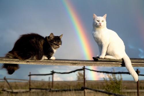 虹を背景に座る猫