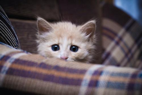 物陰に隠れて怯える子猫