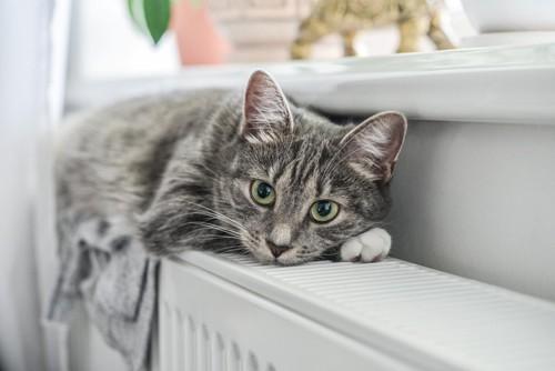 ヒーターの上の猫
