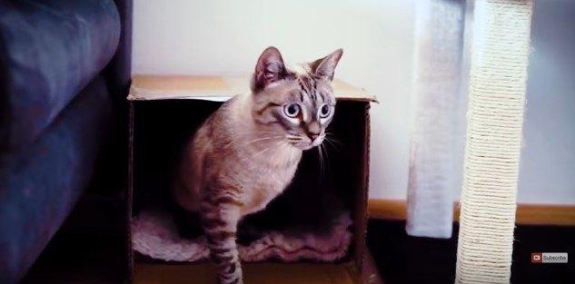前足1本で上半身を支える猫
