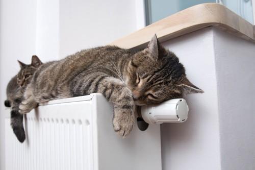 ヒーターの上で寝る猫