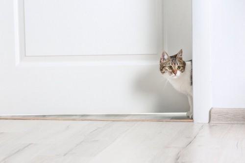 開いた部屋のドアから顔を出す猫
