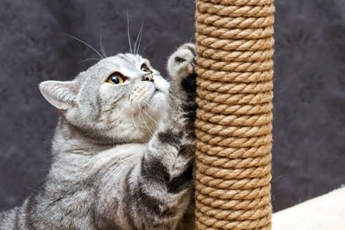 丸太で爪とぎをする猫