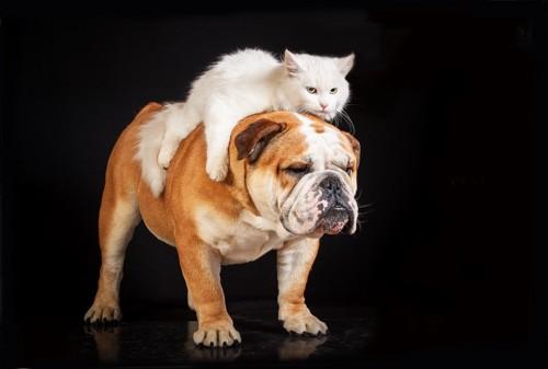 犬に乗っている猫