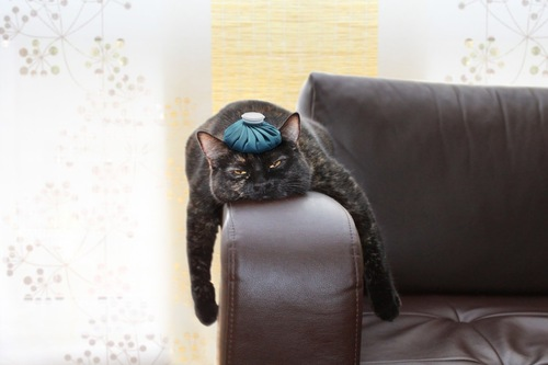 ソファーで伸びている猫