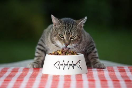 テーブルの上でご飯を食べる猫