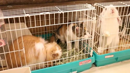 猫と左右にいるウサギ