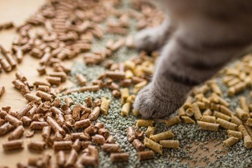 猫砂とサバ猫の前肢