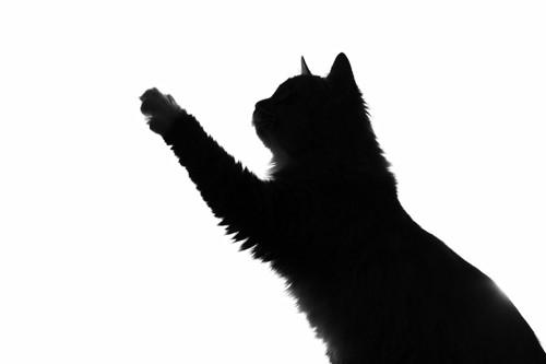 片手を伸ばす黒猫