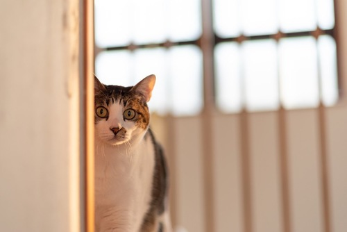 物陰から見つめる猫