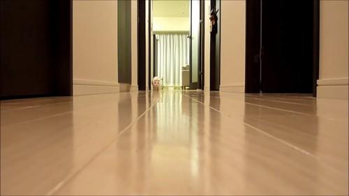廊下の奥にいる姿勢を低くする猫