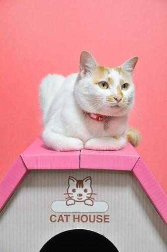 屋根に乗る猫