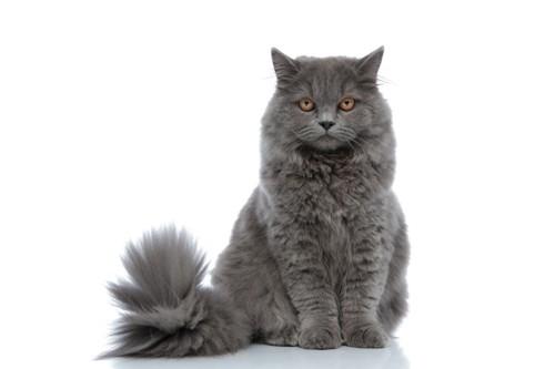 プライドの高そうな猫