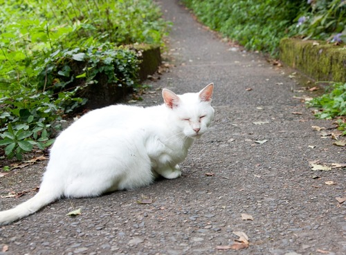 道端の白猫