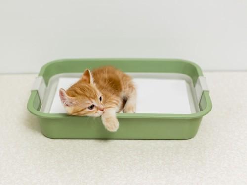 トイレでくつろぐ子猫