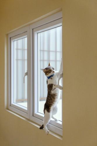 窓枠に登る猫