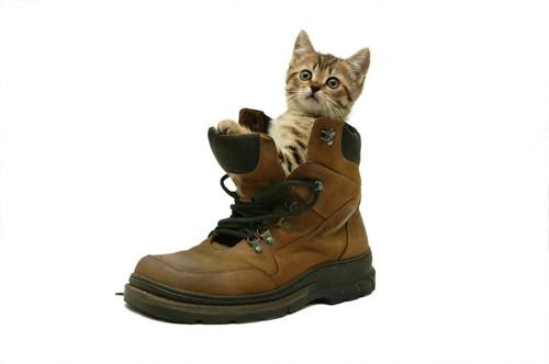 靴の中に入る猫