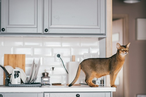 キッチンで立つ猫
