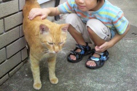 幼い子供と茶トラ猫