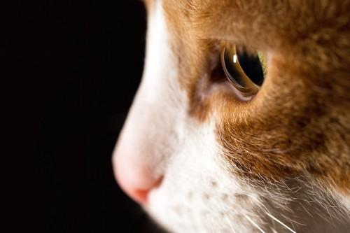 真剣に考えている猫の横顔