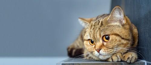 身を丸める猫