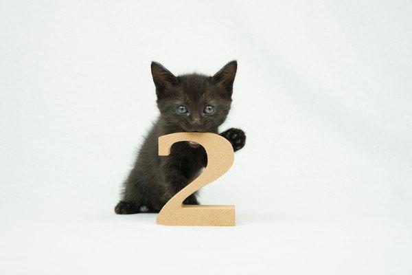 2の数字と黒猫の子猫