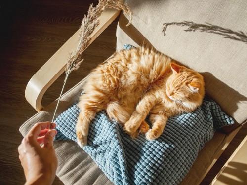 日向ぼっこで眠る猫