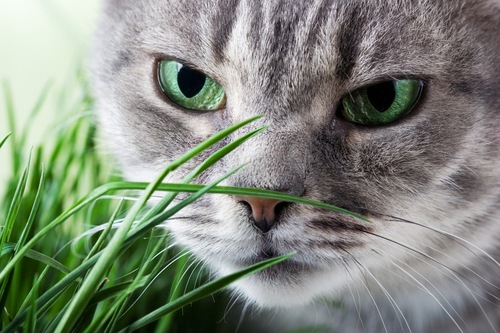 葉っぱと緑の目の猫