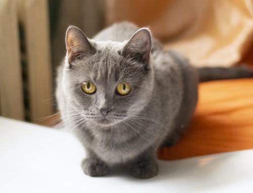 小さくなってこちらを見つめる猫