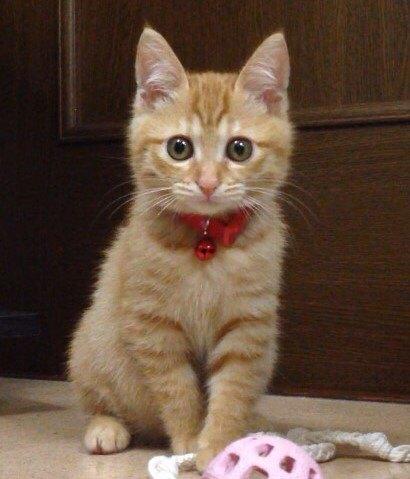 手前にボールがあり、たたずむ子猫(すずこ)