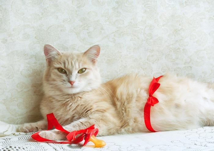 リボンの付けた猫