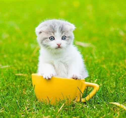 草原の中でのカップ猫