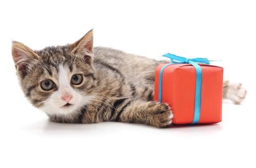 恩返しのプレゼントを持つ猫